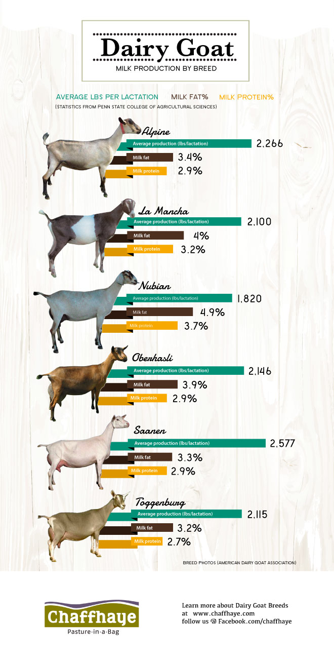 xdairy-goats_milk-production.jpg.pagespeed.ic.DkxzpR4Ksq
